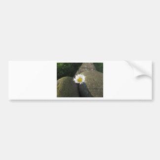 Adesivo De Para-choque Única flor da margarida branca entre as pedras