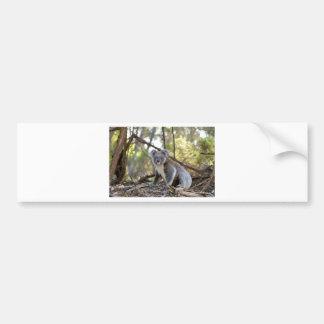 Adesivo De Para-choque Urso de Koala cinzento e branco