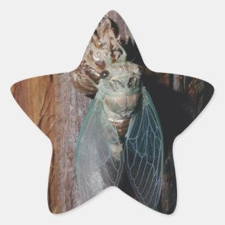 Adesivo Estrela A cigarra seca suas asas