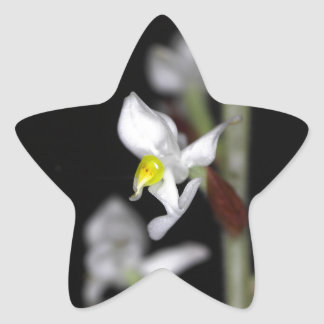 Adesivo Estrela A flor da orquídea Ludisia descolora-se