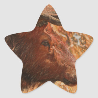 Adesivo Estrela Alces de Bull