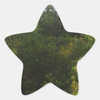 Adesivo Estrela Amigos verdes