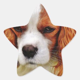 Adesivo Estrela Animal de animal de estimação engraçado descuidado