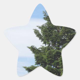 Adesivo Estrela Árvore de abeto verde contra um céu claro