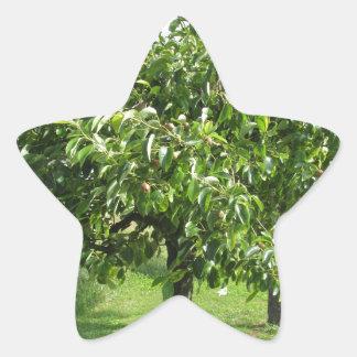 Adesivo Estrela Árvore de pera com folhas do verde e frutas