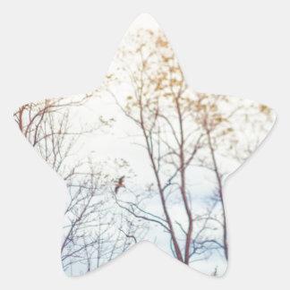 Adesivo Estrela Árvores do inverno