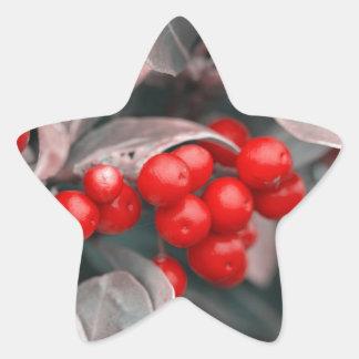 Adesivo Estrela Bagas do Natal
