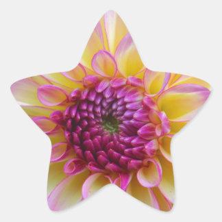 Adesivo Estrela Beleza da dália