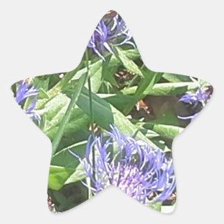 Adesivo Estrela Borboleta em Coneflower roxo
