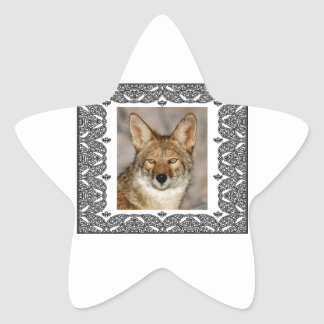 Adesivo Estrela chacal em um quadro