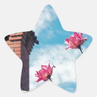 Adesivo Estrela Chaminé e rosas selvagens