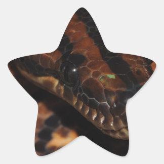 Adesivo Estrela Cobra