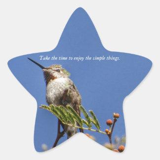 Adesivo Estrela Colibri no ramo por SnapDaddy