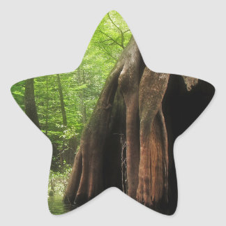 Adesivo Estrela Cypress oco maciço