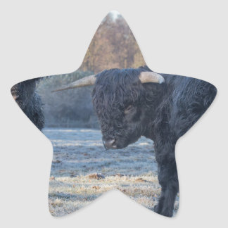 Adesivo Estrela Dois escoceses escoceses pretos no prado congelado