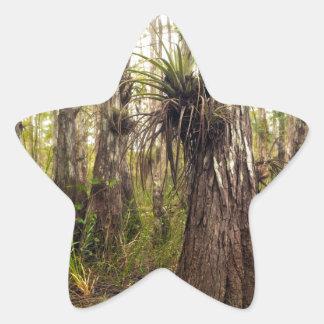 Adesivo Estrela Epiphyte Bromeliad na floresta de Florida