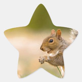 Adesivo Estrela Esquilo com fome