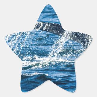 Adesivo Estrela Estado de Washington da baleia de Humpback