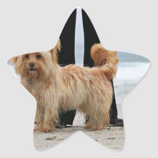 Adesivo Estrela Farris - Lucy - raça misturada