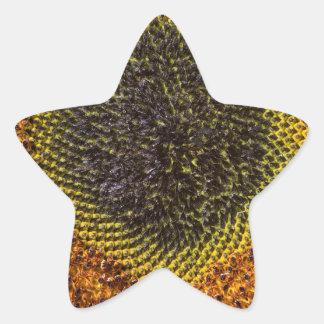 Adesivo Estrela Feche acima do coração do girassol