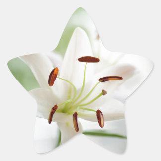 Adesivo Estrela Flor do lírio branco inteiramente aberta