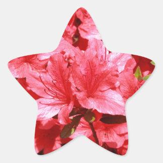 Adesivo Estrela flores do vermelho da azálea