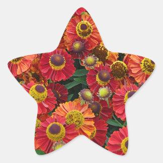 Adesivo Estrela Flores vermelhas e alaranjadas do helenium