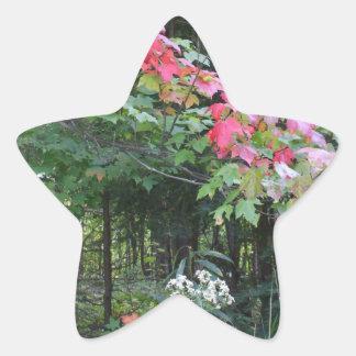 Adesivo Estrela Folhas de outono na árvore de bordo