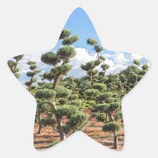 Adesivo Estrela Formas bonitas do topiary nas coníferas