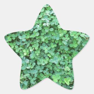 Adesivo Estrela Foto verde da natureza do trevo