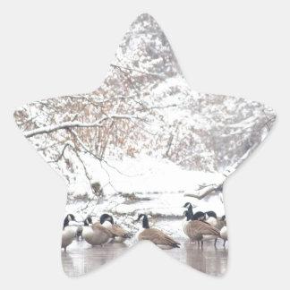 Adesivo Estrela Gansos na neve