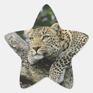 Adesivo Estrela Gato selvagem animal do safari de África da árvore
