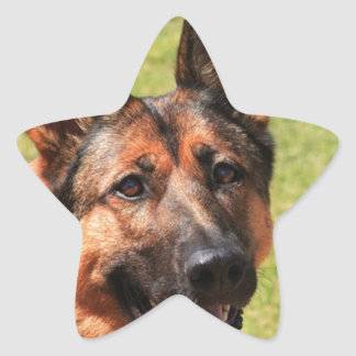 Adesivo Estrela German shepherd de Malinois do belga