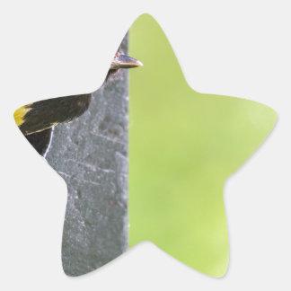 Adesivo Estrela Grande pai do melharuco no furo da caixa-ninha