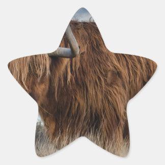 Adesivo Estrela Iaques de Brown no verde e no campo de grama de