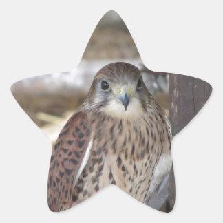 Adesivo Estrela Kestrel empoleirado em um cargo da cerca