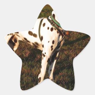 Adesivo Estrela Kevin o Dalmatian