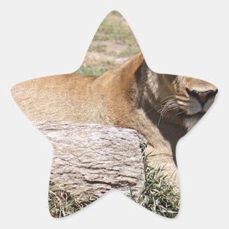 Adesivo Estrela Leão