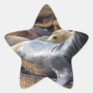 Adesivo Estrela Leões de mar na doca de flutuação em San Francisco