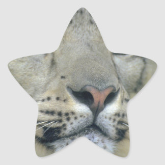 Adesivo Estrela leopardo de neve