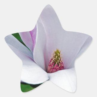 Adesivo Estrela Magnólia elegante