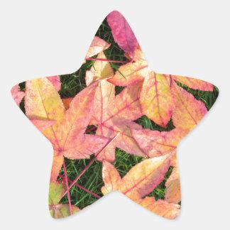 Adesivo Estrela Muitas folhas de bordo coloridas do outono na