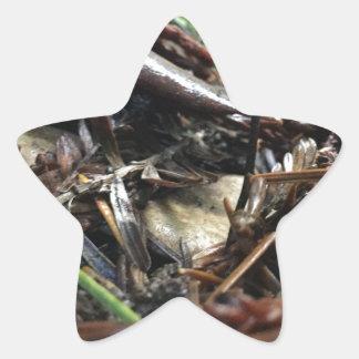 Adesivo Estrela Não tropece o cogumelo