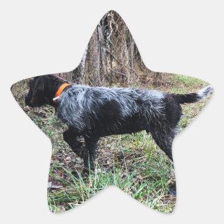 Adesivo Estrela No filhote de cachorro do ponto