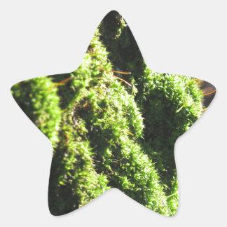 Adesivo Estrela O musgo verde no detalhe da natureza de musgo