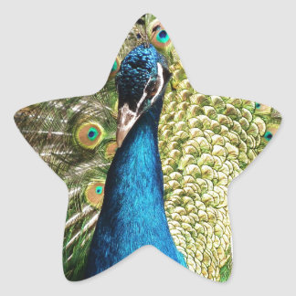 Adesivo Estrela O pavão bonito
