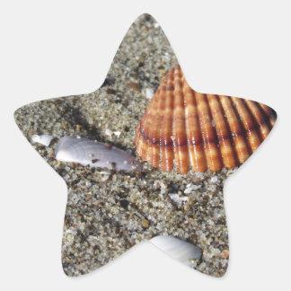 Adesivo Estrela Os Seashells no verão da areia encalham a opinião