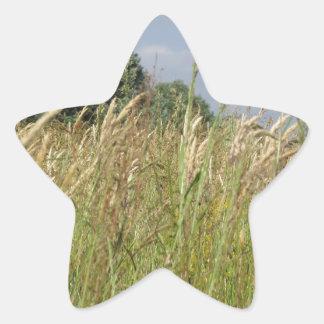 Adesivo Estrela Paisagem do verão do campo selvagem no campo