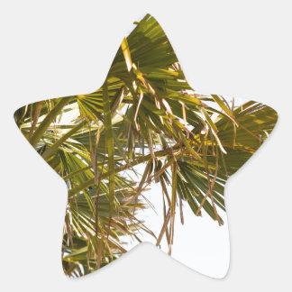 Adesivo Estrela Palmeira da costa leste Myrtle Beach famoso