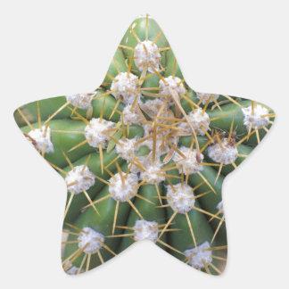 Adesivo Estrela Parte superior do cacto